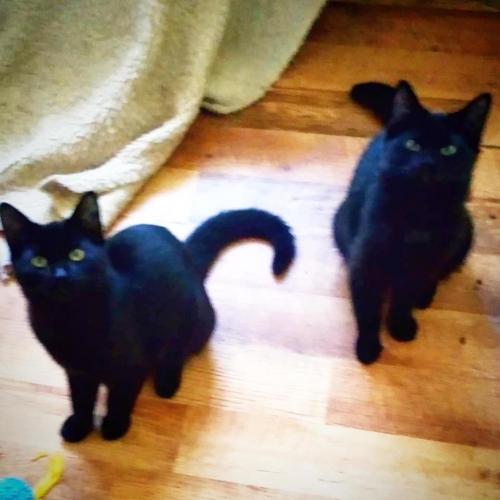 Boo & Onyx
